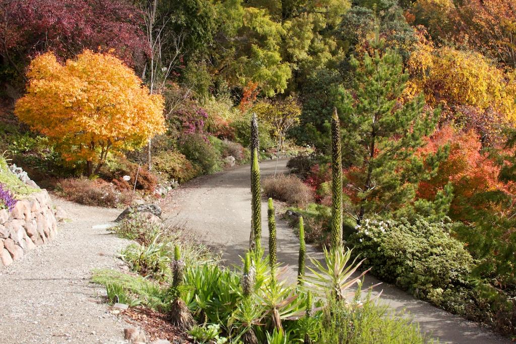 UC Botanical Garden at Berkeley | STATE OF LIGHT